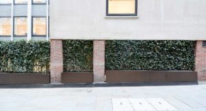 Bespoke living wall located in St James's Market